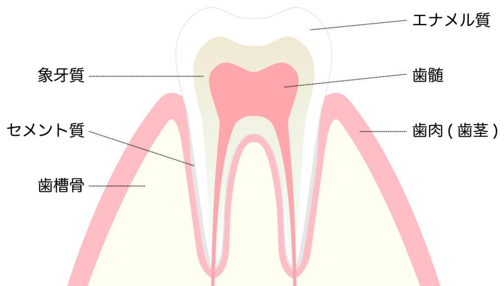 565268 1024x581 - 一般歯科